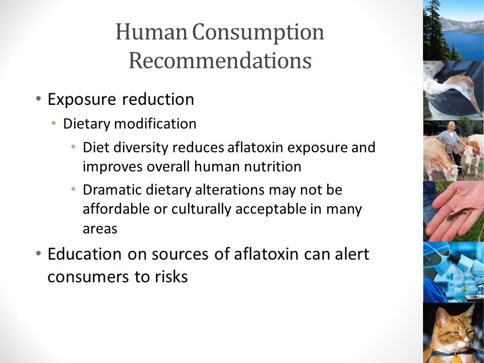 Human Consumption Recommendations Exposure reduction Dietary modification Diet diversity reduces aflatoxin exposure and improves overall human nutrition Dramatic dietary alterations may not be affordable or culturally acceptable in many areas Education on sources of aflatoxin can alert consumers to risks