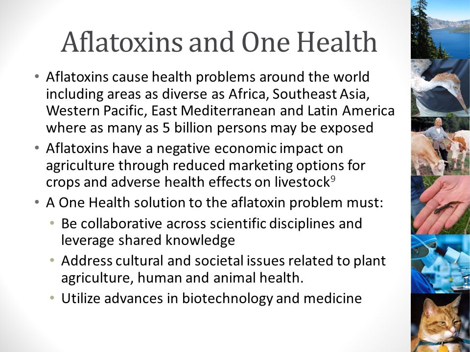 Strategies for Reducing Aflatoxin Exposure Regulations Agricultural production quality control Food processing and crop storage safety Early recognition and medical management of health effects Educational outreach Community Individual