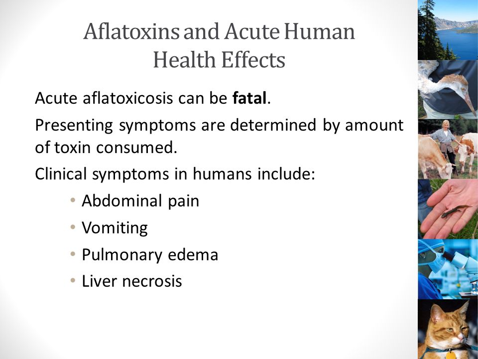 Chronic Aflatoxin Exposure and Human Health Carcinogenicity Liver cancer is a serious consequence of long-term exposure to aflatoxins.