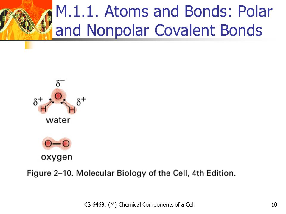 CS 6463: (M) Chemical Components of a Cell10 M.1.1.