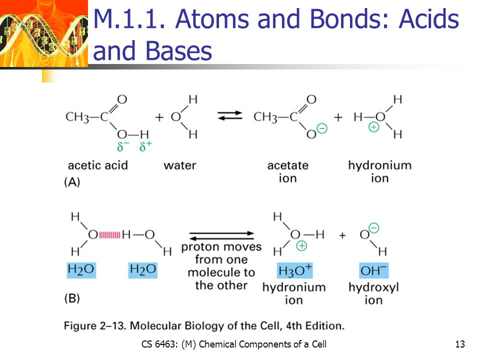 CS 6463: (M) Chemical Components of a Cell13 M.1.1. Atoms and Bonds: Acids and Bases