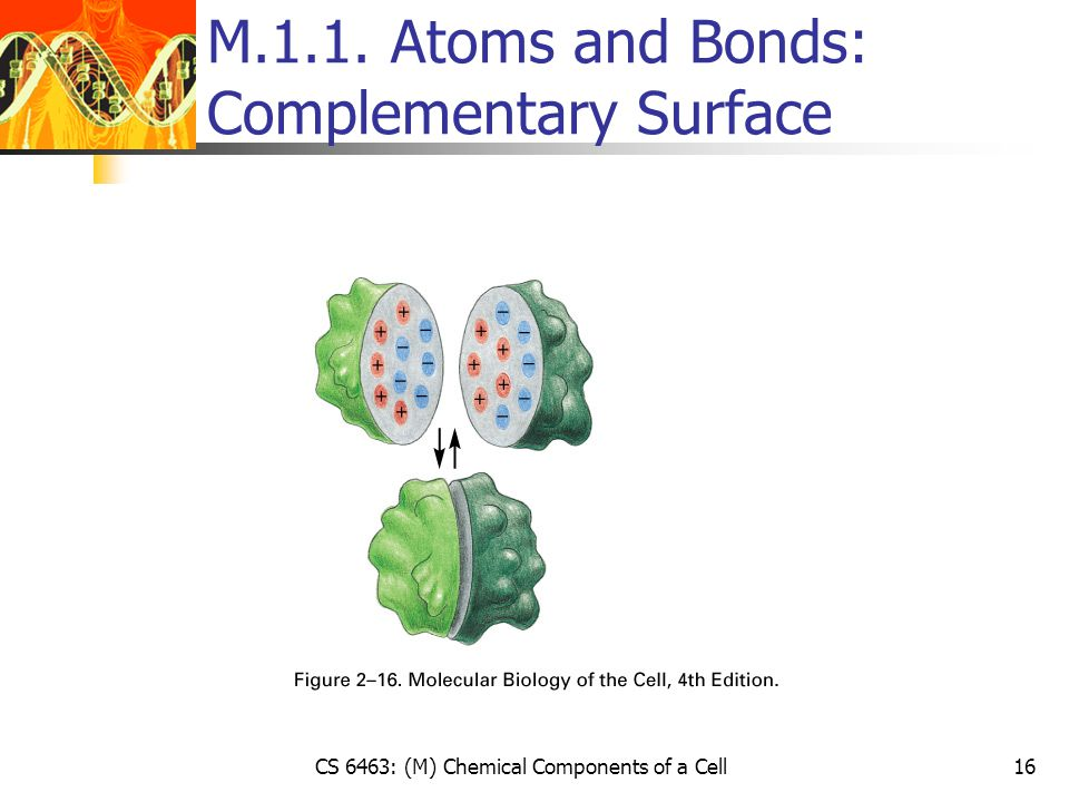 CS 6463: (M) Chemical Components of a Cell16 M.1.1. Atoms and Bonds: Complementary Surface