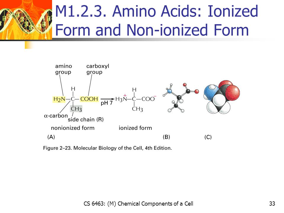 CS 6463: (M) Chemical Components of a Cell33 M1.2.3. Amino Acids: Ionized Form and Non-ionized Form