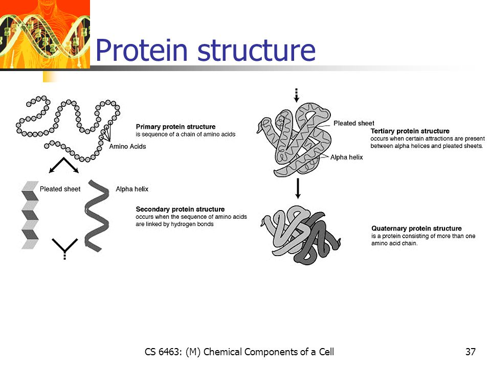 Protein structure CS 6463: (M) Chemical Components of a Cell37