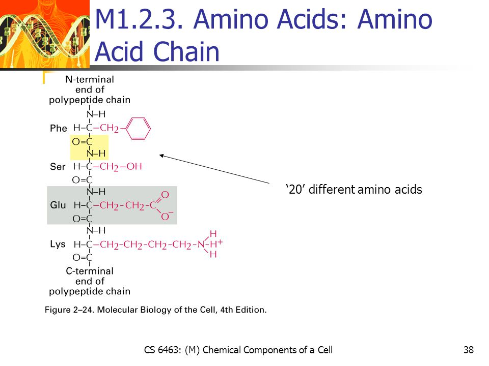 CS 6463: (M) Chemical Components of a Cell38 M1.2.3.