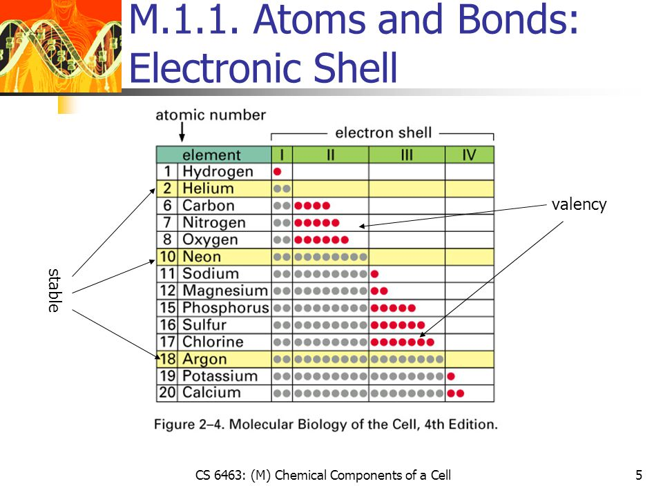 CS 6463: (M) Chemical Components of a Cell6 M.1.1.