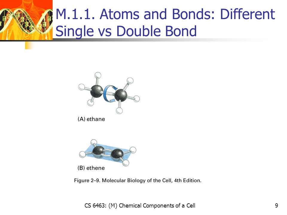CS 6463: (M) Chemical Components of a Cell20 M1.2.1.
