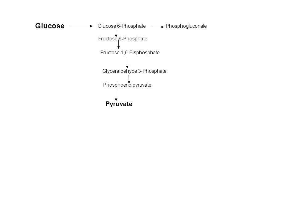 Glucose Glucose 6-Phosphate Fructose 6-Phosphate Fructose 1,6-Bisphosphate Glyceraldehyde 3-Phosphate Pyruvate Phosphogluconate Phosphoenolpyruvate