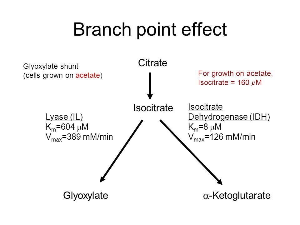 Branch point effect Citrate Glyoxylate  -Ketoglutarate Isocitrate Lyase (IL) K m =604  M V max =389 mM/min Isocitrate Dehydrogenase (IDH) K m =8  M V max =126 mM/min Glyoxylate shunt (cells grown on acetate) For growth on acetate, Isocitrate = 160  M