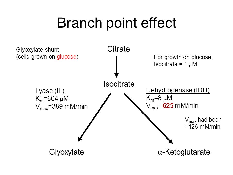 Branch point effect Citrate Glyoxylate  -Ketoglutarate Isocitrate Lyase (IL) K m =604  M V max =389 mM/min Dehydrogenase (IDH) K m =8  M V max =625 mM/min Glyoxylate shunt (cells grown on glucose) For growth on glucose, Isocitrate = 1  M V max had been =126 mM/min