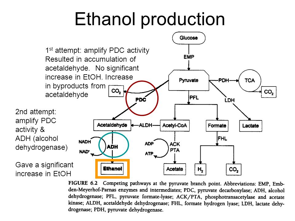 Ethanol production 1 st attempt: amplify PDC activity Resulted in accumulation of acetaldehyde.