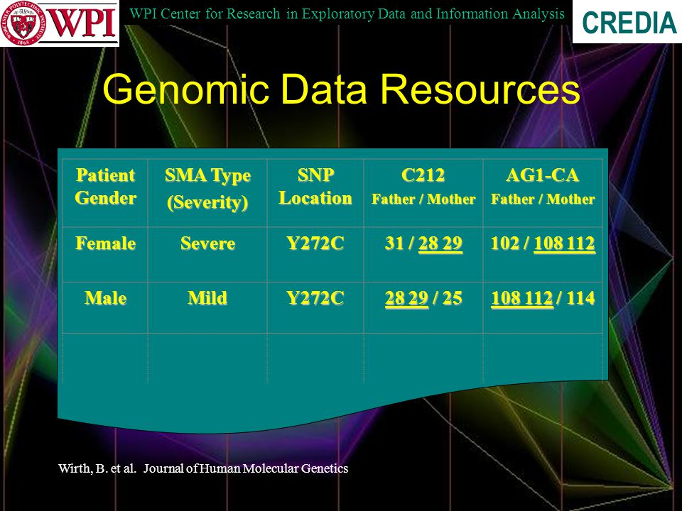 WPI Center for Research in Exploratory Data and Information Analysis CREDIA Genomic Data Resources Patient Gender SMA Type (Severity) SNP Location C212 Father / Mother AG1-CA FemaleSevereY272C 31 / 28 29 102 / 108 112 MaleMildY272C 28 29 / 25 108 112 / 114 Wirth, B.