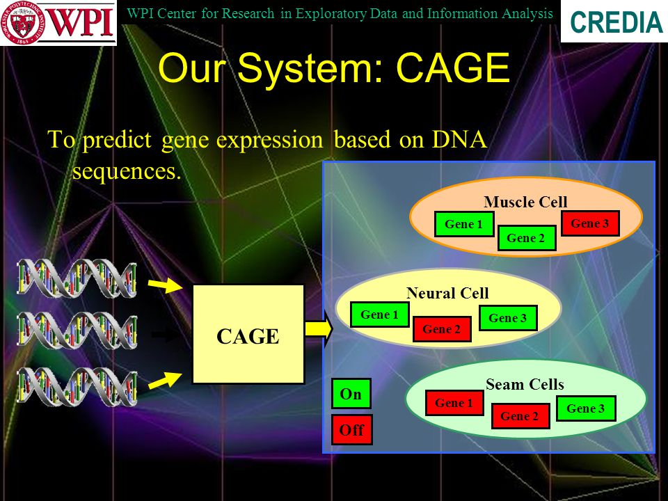 WPI Center for Research in Exploratory Data and Information Analysis CREDIA Our System: CAGE To predict gene expression based on DNA sequences.