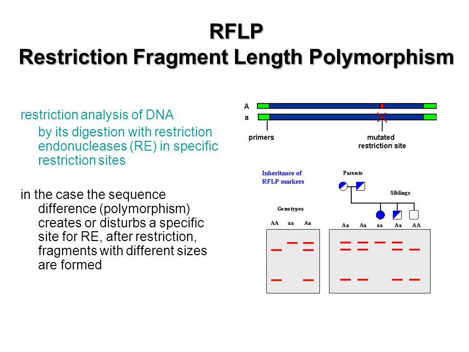 RFLP Restriction Fragment Length Polymorphism restriction analysis of DNA by its digestion with restriction endonucleases (RE) in specific restriction sites in the case the sequence difference (polymorphism) creates or disturbs a specific site for RE, after restriction, fragments with different sizes are formed