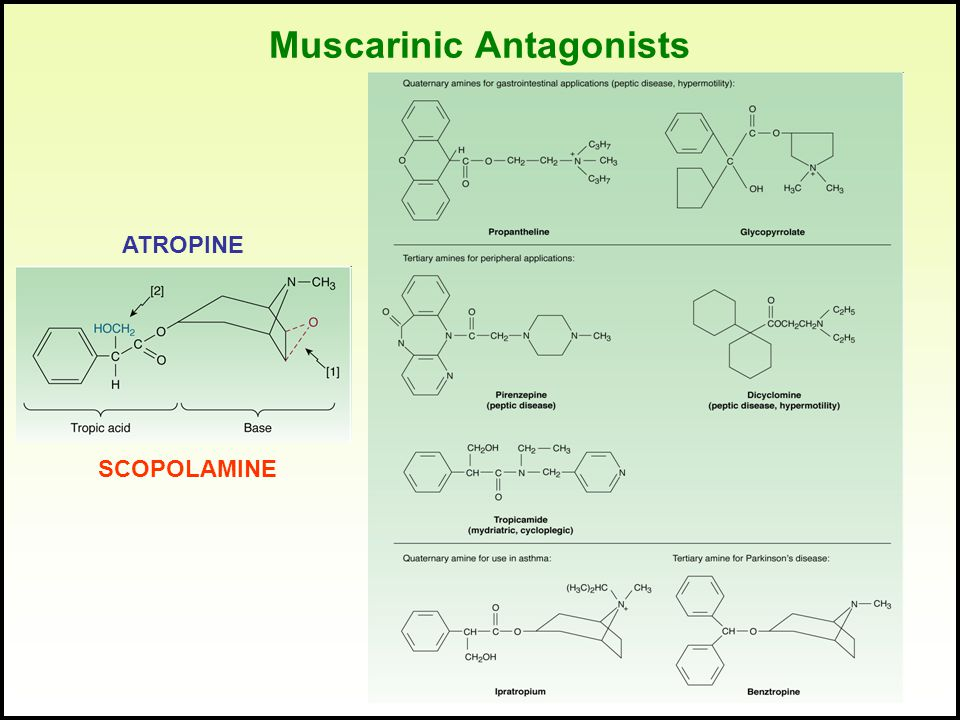 Muscarinic Antagonists ATROPINE SCOPOLAMINE
