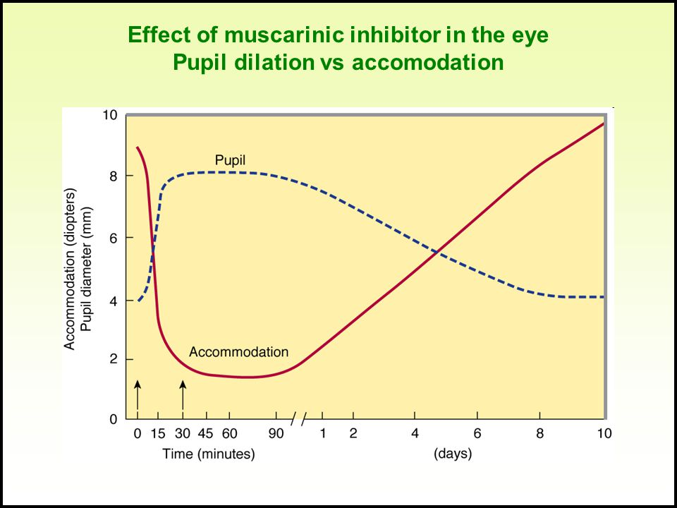 Effect of muscarinic inhibitor in the eye Pupil dilation vs accomodation