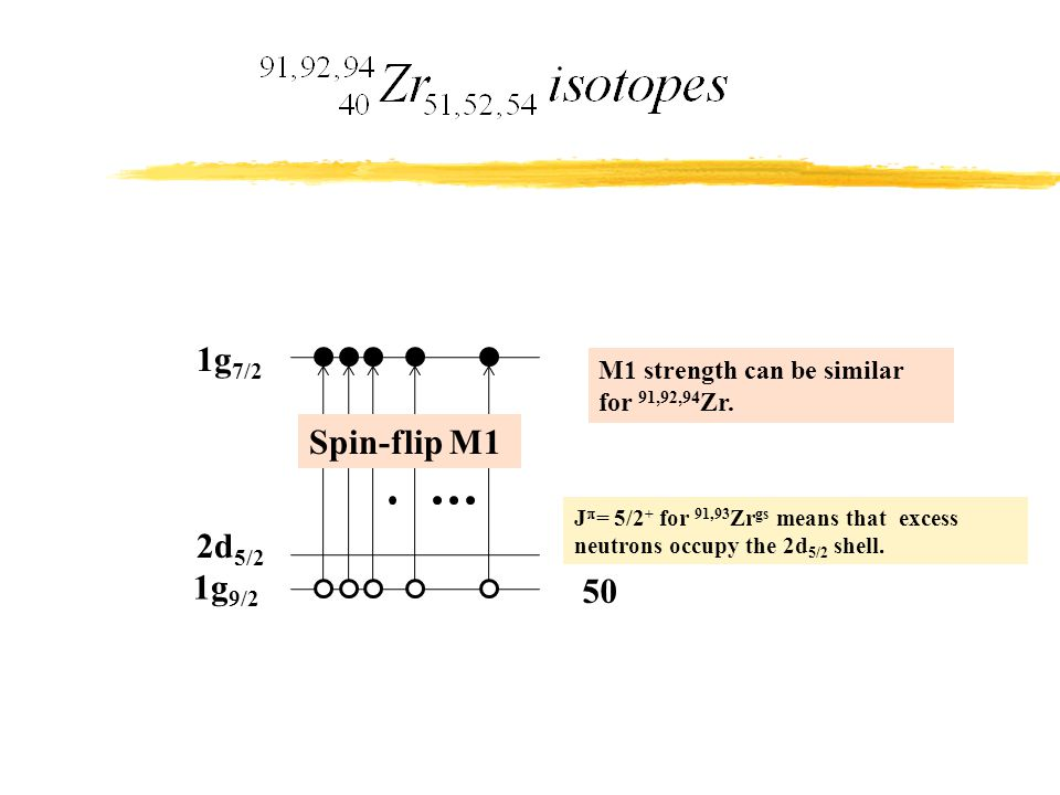 1g 9/2 1g 7/2 2d 5/2 50 J  = 5/2 + for 91,93 Zr gs means that excess neutrons occupy the 2d 5/2 shell. Spin-flip M1 M1 strength can be similar for 91
