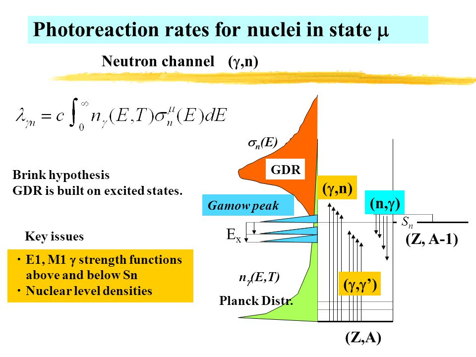 Photoreaction rates for nuclei in state  ExEx n  (E,T) Gamow peak SnSn (Z,A) (Z, A-1) ( ,n) (n,  ) ・ E1, M1  strength functions above and below Sn ・ Nuclear level densities ( ,  ') Planck Distr.