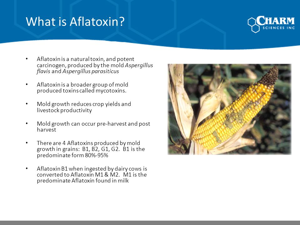What is Aflatoxin? Aflatoxin is a natural toxin, and potent carcinogen, produced by the mold Aspergillus flavis and Aspergillus parasiticus Aflatoxin