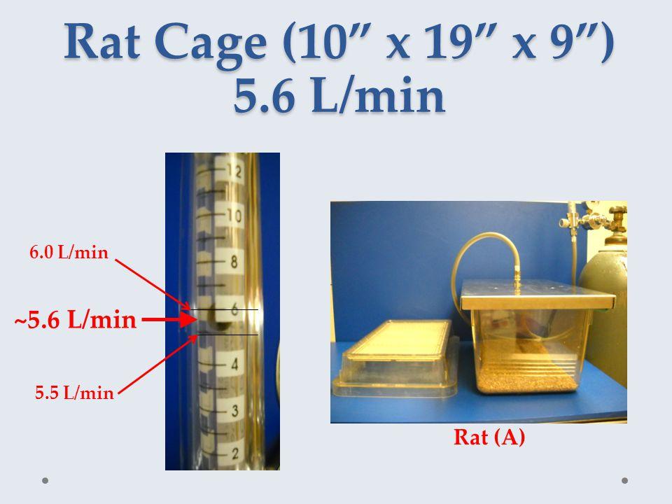 Rat Cage (10 x 19 x 9 ) 5.6 L/min ~5.6 L/min 5.5 L/min 6.0 L/min Rat (A)