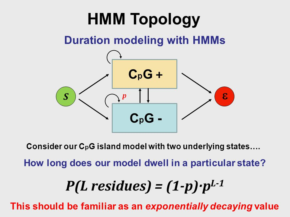 HMM Topology Duration modeling with HMMs Consider our C p G island model with two underlying states….