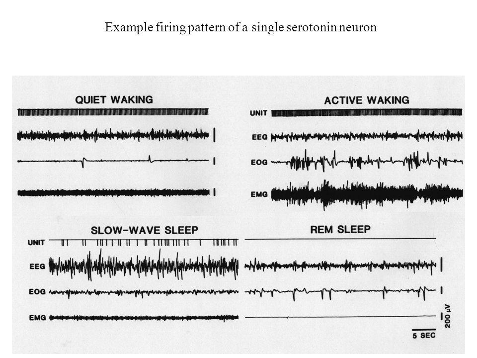 Example firing pattern of a single serotonin neuron