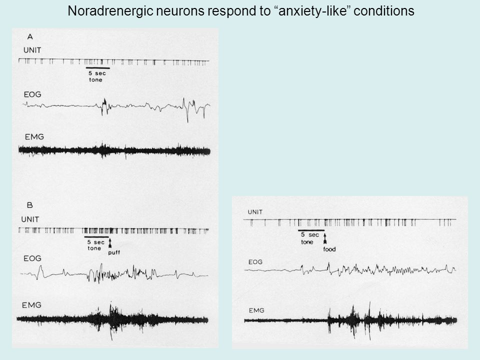 Noradrenergic neurons respond to anxiety-like conditions