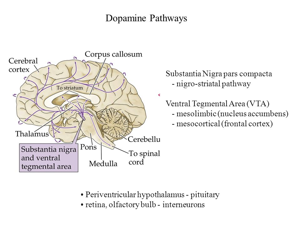 Substantia Nigra pars compacta - nigro-striatal pathway Ventral Tegmental Area (VTA) - mesolimbic (nucleus accumbens) - mesocortical (frontal cortex)