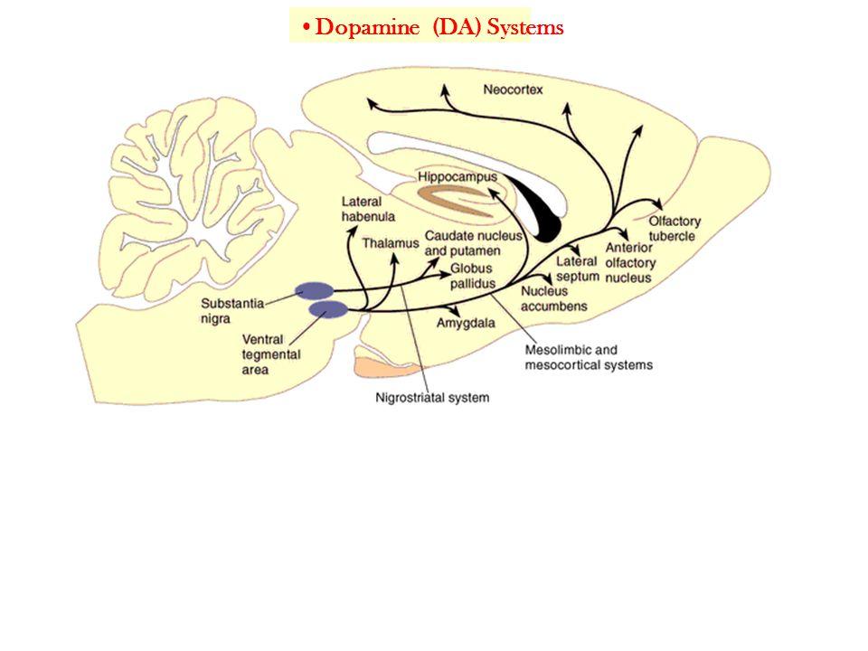 Dopamine (DA) Systems