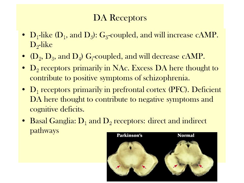 DA Receptors D 1 -like (D 1, and D 5 ): G S -coupled, and will increase cAMP.