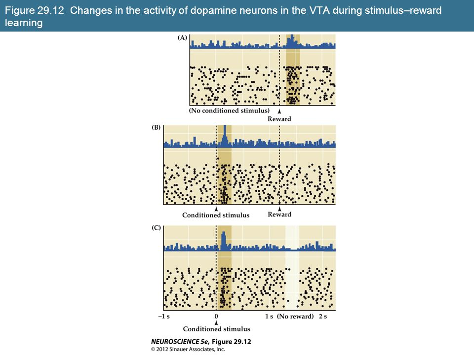 Figure 29.12 Changes in the activity of dopamine neurons in the VTA during stimulus–reward learning