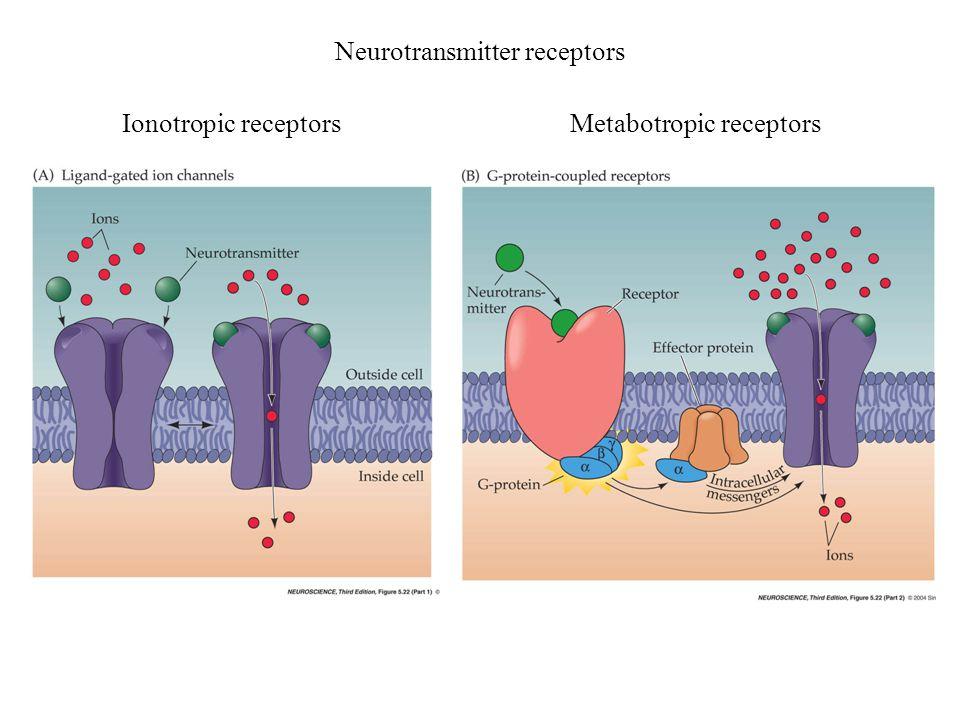 Ionotropic receptorsMetabotropic receptors Neurotransmitter receptors
