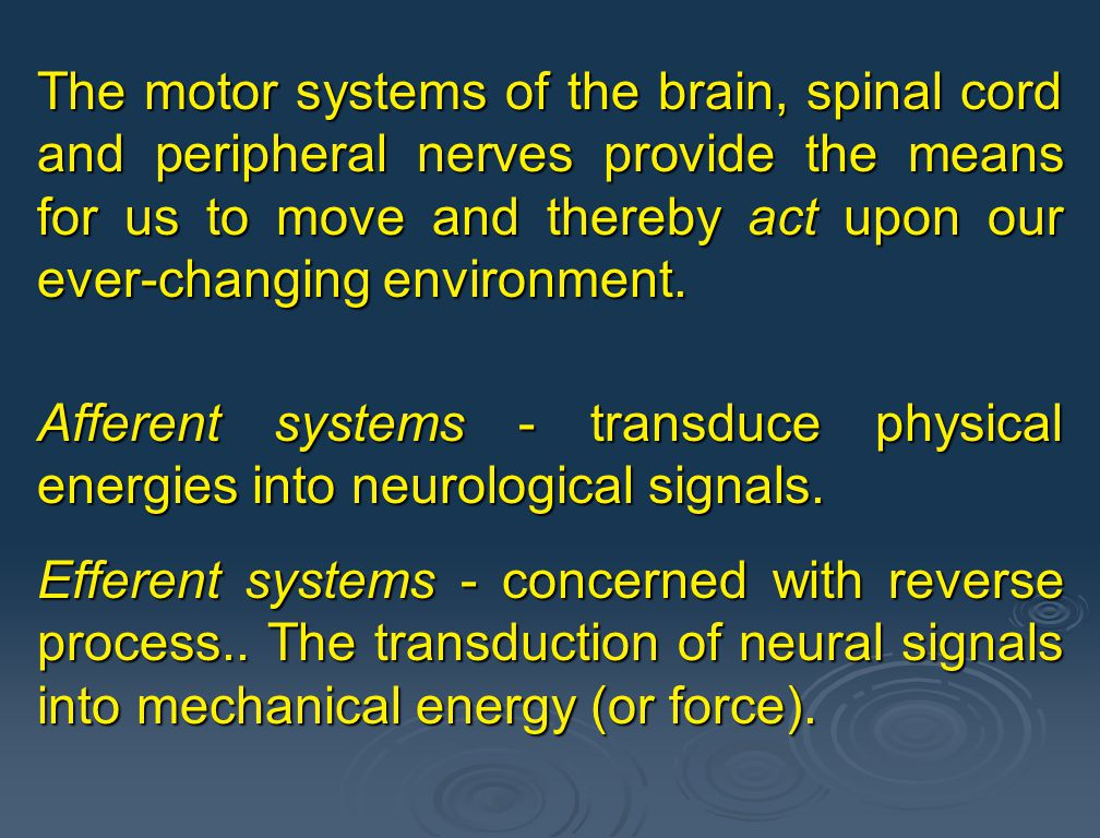 1.Behavioral perspective - holistic approach to studying motor activity. Investigates the behavioral pattern of an animal. 2.Control systems perspecti