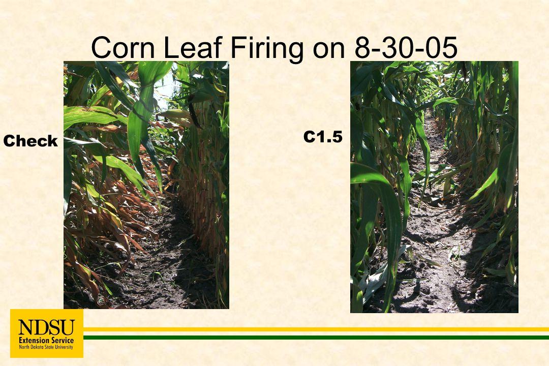 Corn Leaf Firing on 8-30-05 Check C1.5