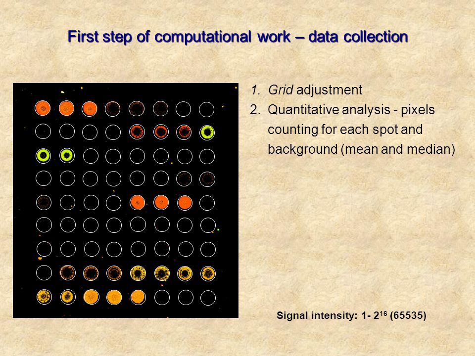 First step of computational work – data collection 1.Grid adjustment 2.Quantitative analysis - pixels counting for each spot and background (mean and median) Signal intensity: 1- 2 16 (65535)