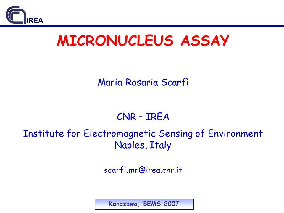 MICRONUCLEUS ASSAY Kanazawa, BEMS 2007 Maria Rosaria Scarfì CNR – IREA Institute for Electromagnetic Sensing of Environment Naples, Italy scarfi.mr@irea.cnr.it IREA