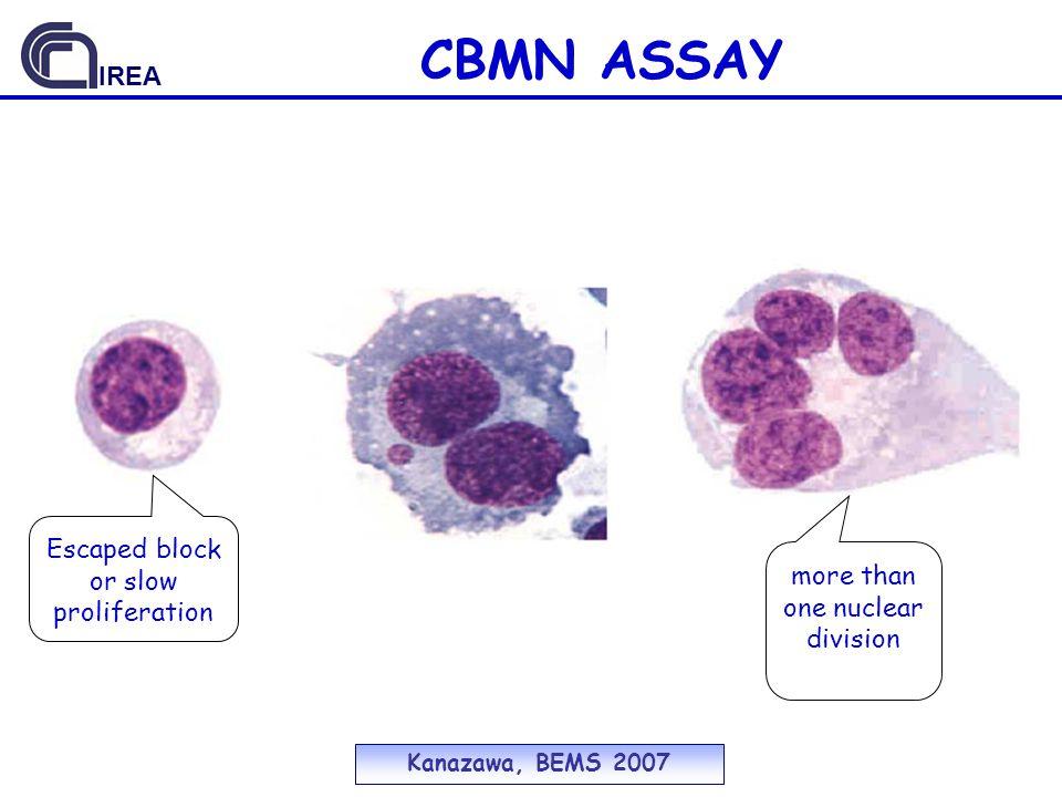 CBMN ASSAY Escaped block or slow proliferation more than one nuclear division Kanazawa, BEMS 2007 IREA