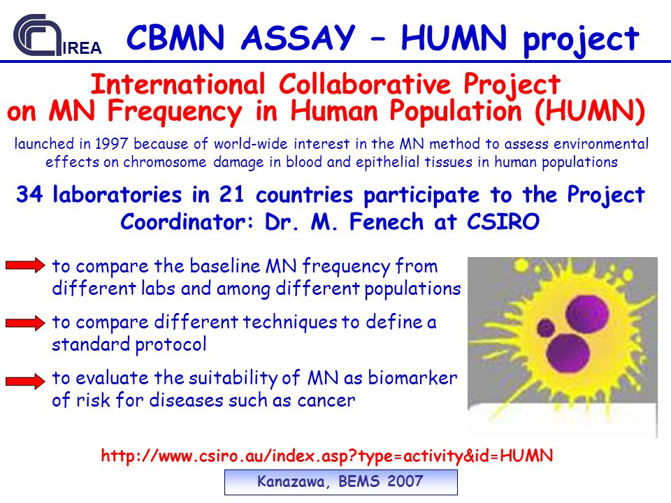 CBMN ASSAY – HUMN project International Collaborative Project on MN Frequency in Human Population (HUMN) 34 laboratories in 21 countries participate to the Project Coordinator: Dr.