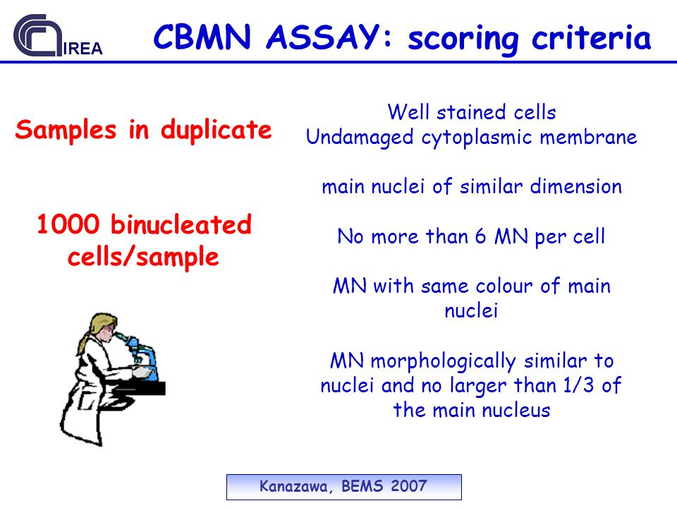 CBMN ASSAY: scoring criteria Well stained cells Undamaged cytoplasmic membrane main nuclei of similar dimension No more than 6 MN per cell MN with same colour of main nuclei MN morphologically similar to nuclei and no larger than 1/3 of the main nucleus Samples in duplicate 1000 binucleated cells/sample Kanazawa, BEMS 2007 IREA
