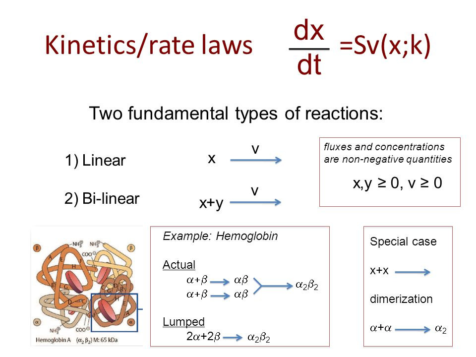 Kinetics/rate laws =Sv(x;k) dx dt Two fundamental types of reactions: 1)Linear 2)Bi-linear x v x+y v Example: Hemoglobin Actual  Lumped 2  +2   2  2 2222 Special case x+x dimerization  +   2 x,y ≥ 0, v ≥ 0 fluxes and concentrations are non-negative quantities