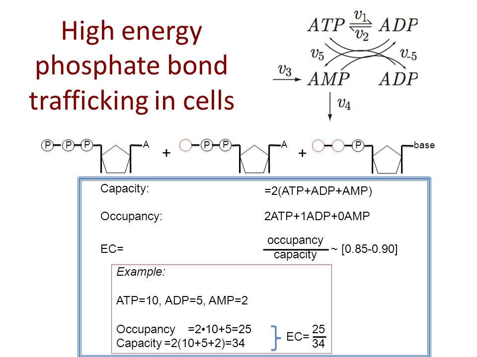 PA P + + Capacity: =2(ATP+ADP+AMP) Occupancy:2ATP+1ADP+0AMP EC= ~ [0.85-0.90] occupancy capacity Example: ATP=10, ADP=5, AMP=2 Occupancy=210+5=25 Capacity=2(10+5+2)=34 25 34 EC= Pbase PA PP High energy phosphate bond trafficking in cells