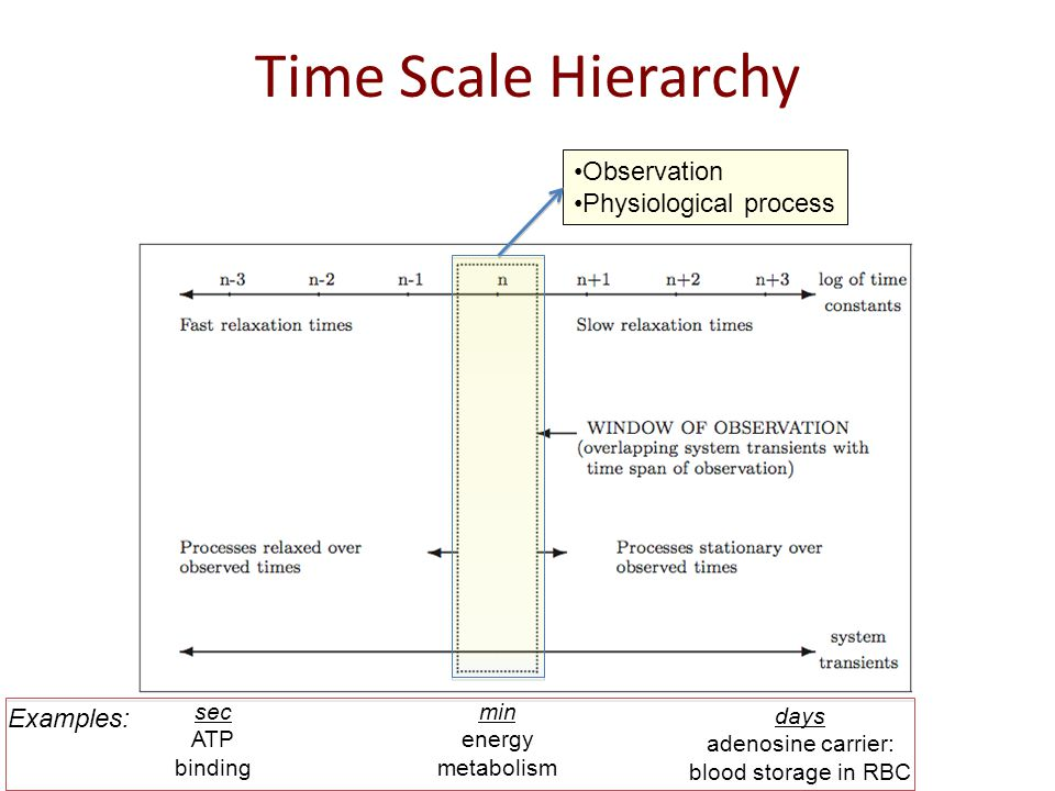 Time Scale Hierarchy Observation Physiological process Examples: sec ATP binding min energy metabolism days adenosine carrier: blood storage in RBC