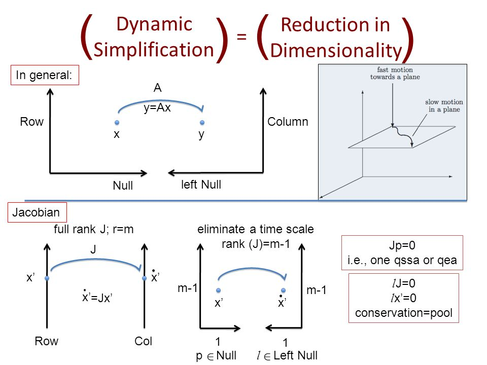 Dynamic Simplification ( ( Reduction in Dimensionality ( ( = Column A xy y=Ax Row Null left Null In general: J x' RowCol x' full rank J; r=m x' 1 1 m-1 eliminate a time scale rank (J)=m-1 p Null l Left Null Jp=0 i.e., one qssa or qea l J=0 l x'=0 conservation=pool Jacobian x' =Jx'