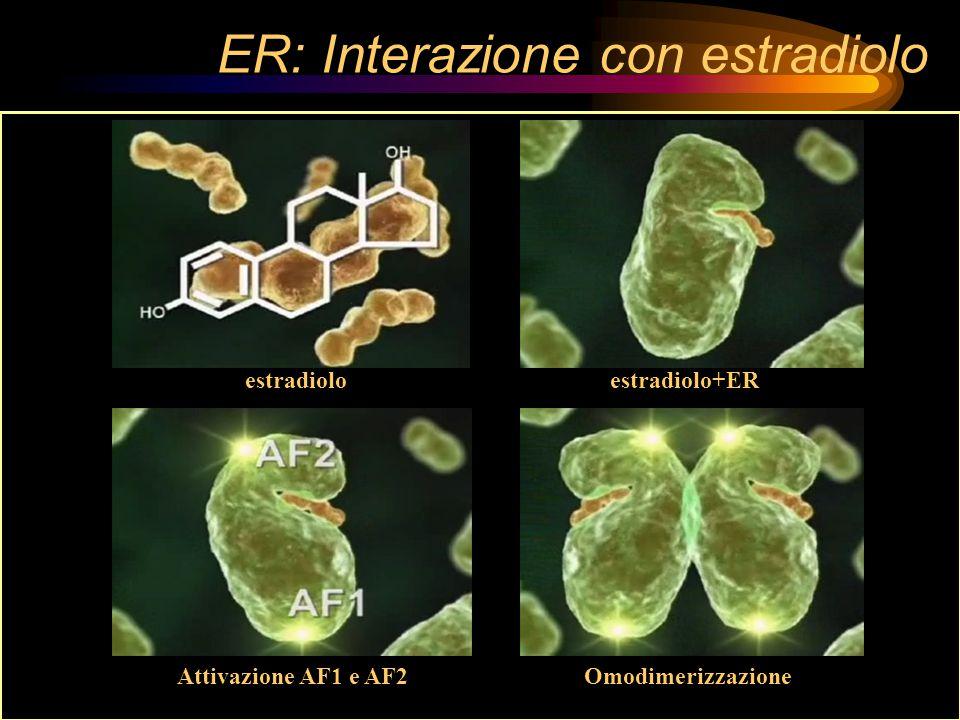 ER: Interazione con estradiolo estradioloestradiolo+ER Attivazione AF1 e AF2Omodimerizzazione