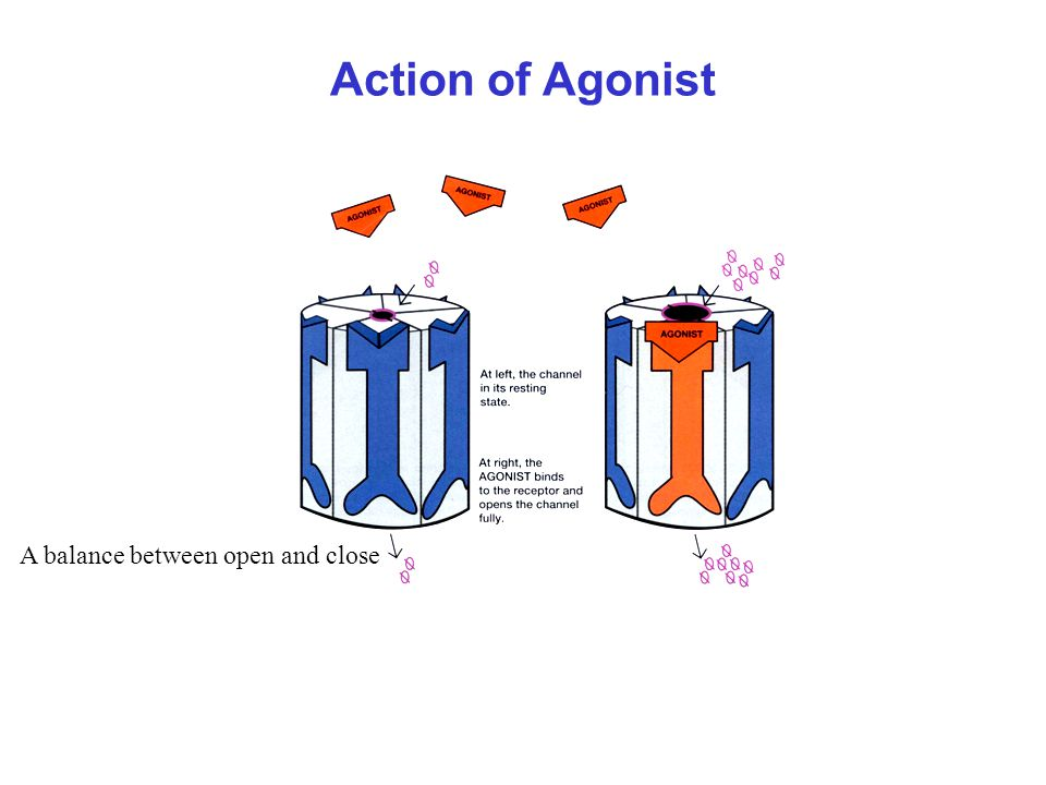 Action of Agonist A balance between open and close