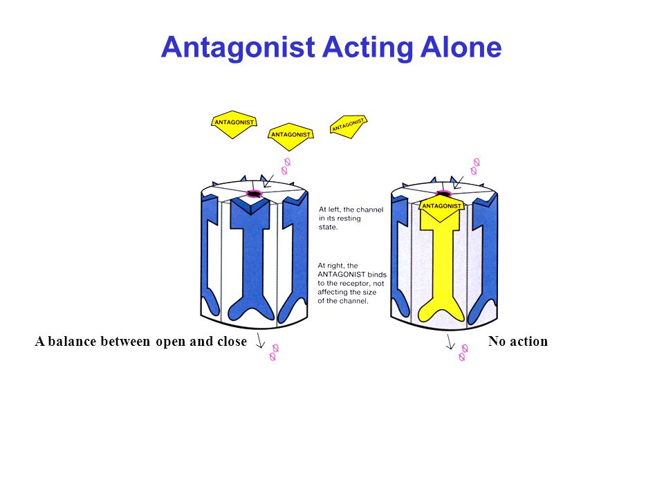 Antagonist Acting Alone A balance between open and closeNo action