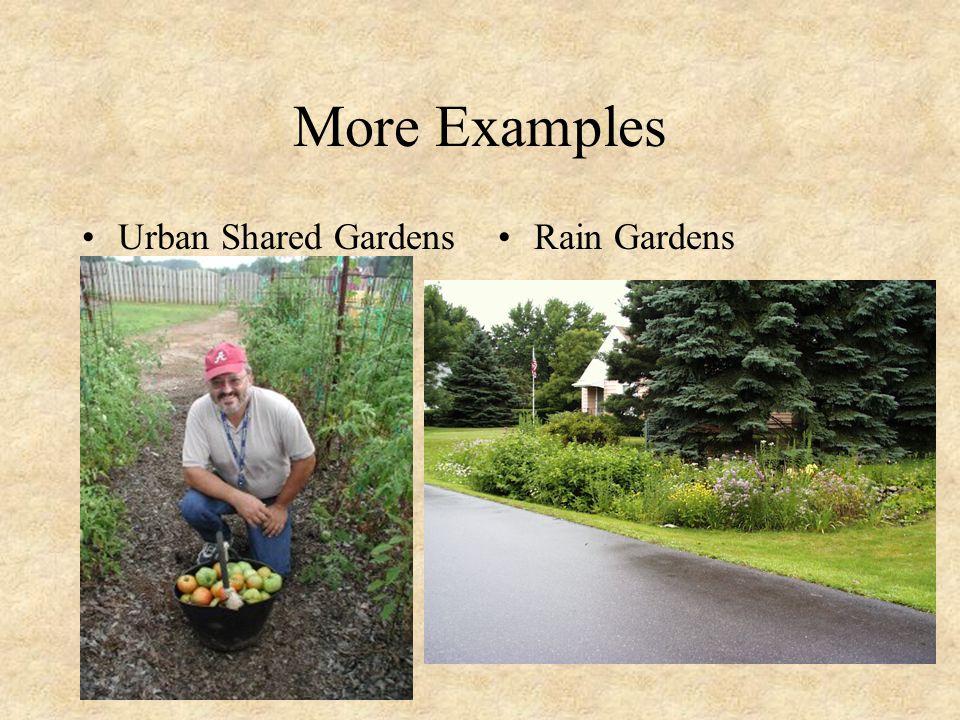 Still more Reduce lawn sizesEliminate exotics/plant perennials & natives