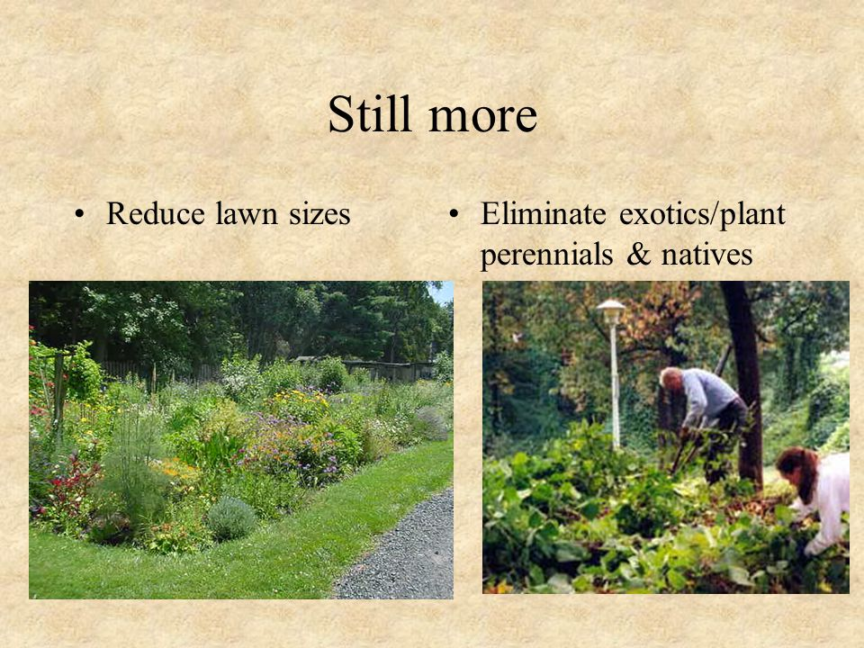 Still more Reduce lawn sizesEliminate exotics/plant perennials & natives