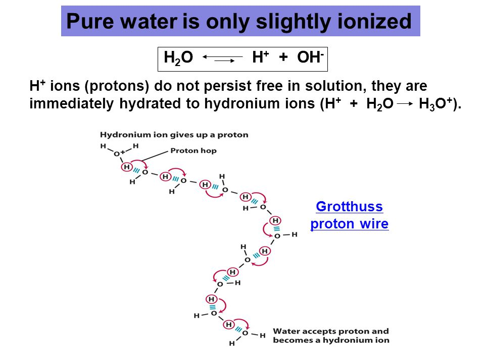 H 2 O H + + OH - Pure water is only slightly ionized H + ions (protons) do not persist free in solution, they are immediately hydrated to hydronium ions (H + + H 2 O H 3 O + ).