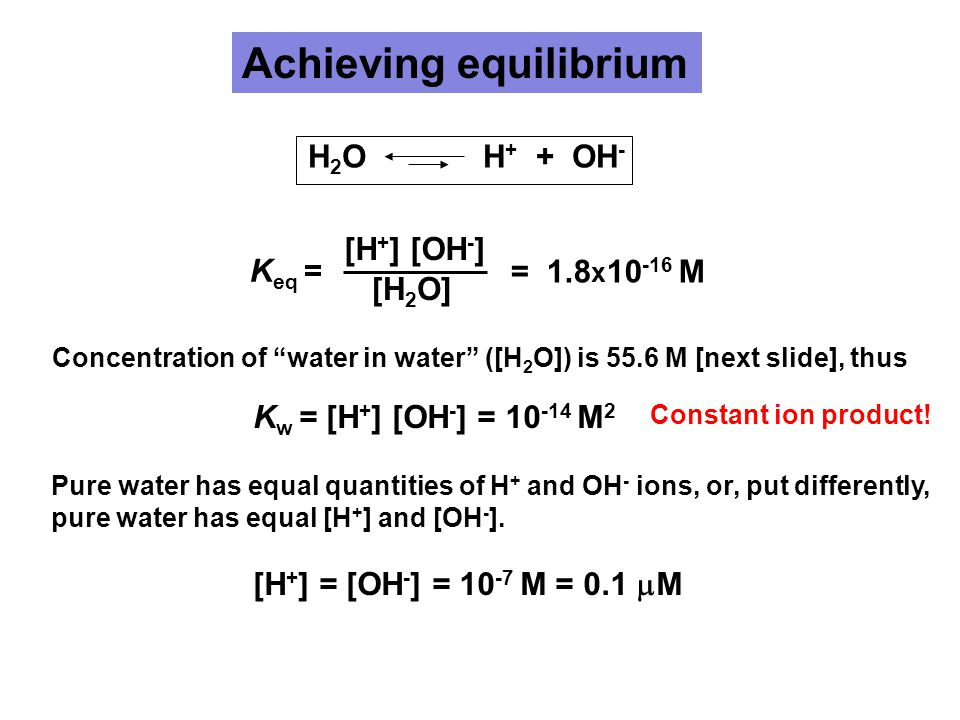 Achieving equilibrium K w = [H + ] [OH - ] = 10 -14 M 2 [H + ] = [OH - ] = 10 -7 M = 0.1  M [H + ] [OH - ] [H 2 O] Concentration of water in water ([H 2 O]) is 55.6 M [next slide], thus Pure water has equal quantities of H + and OH - ions, or, put differently, pure water has equal [H + ] and [OH - ].